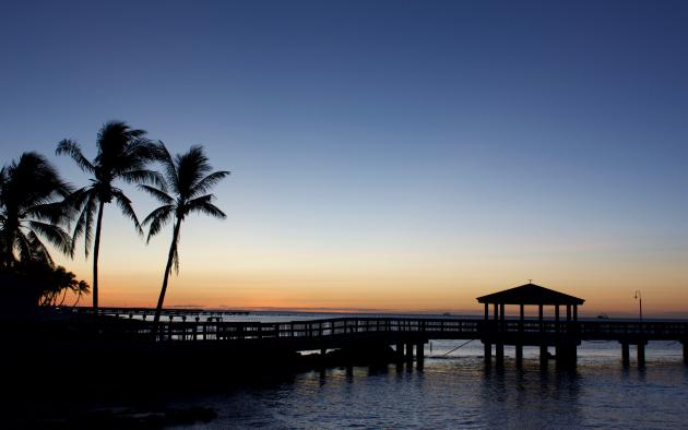 pier and palm trees along florida beach