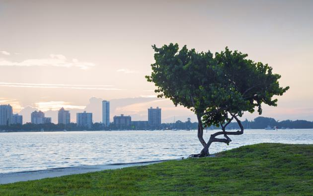 Sarasota, Florida skyline across water with tree in foreground