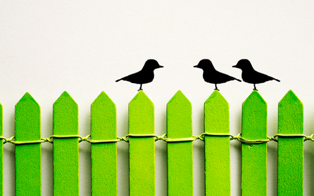 photo illustration of 3 black birds sitting on a green Pickett fence, one bird facing two birds