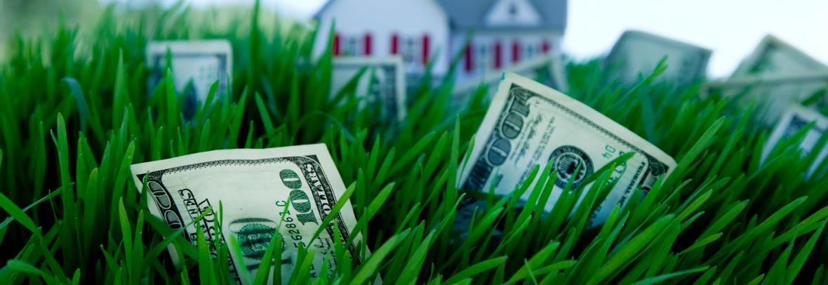 money growing on grass